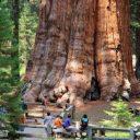 sequoia-geant